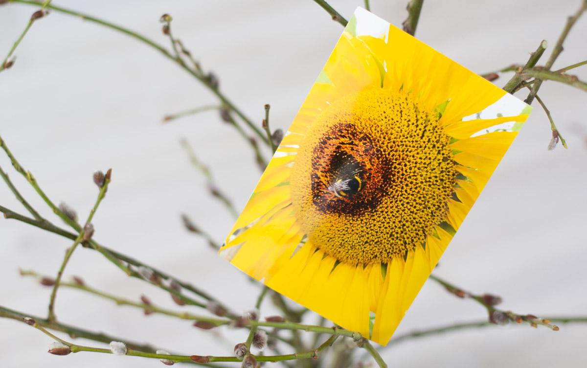Erkennt Ihr es auch? Das Herz der Sonnenblume auf dem die Hummel sitzt. Danke Daniele. @zollstocker