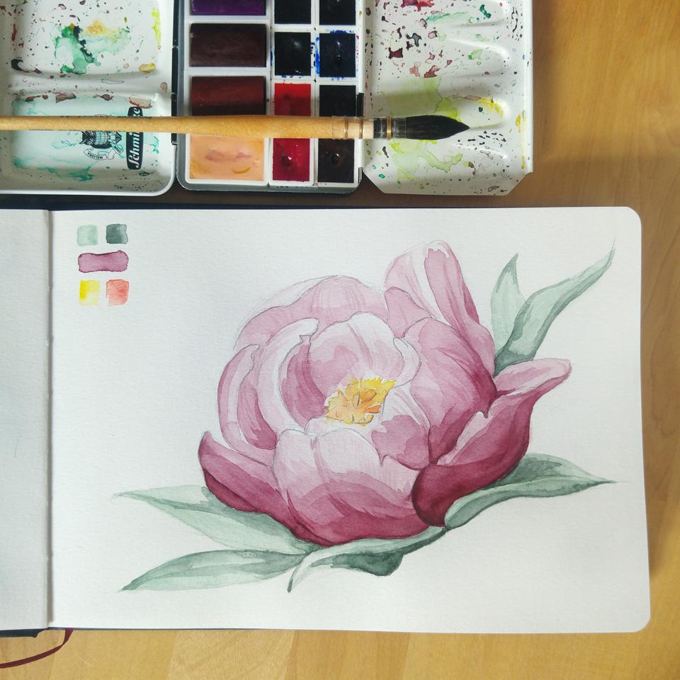 Eine Pfingstrose mit verschiedenen Aquarellefarben in meinem Watercolour Book von Hahnemühle.