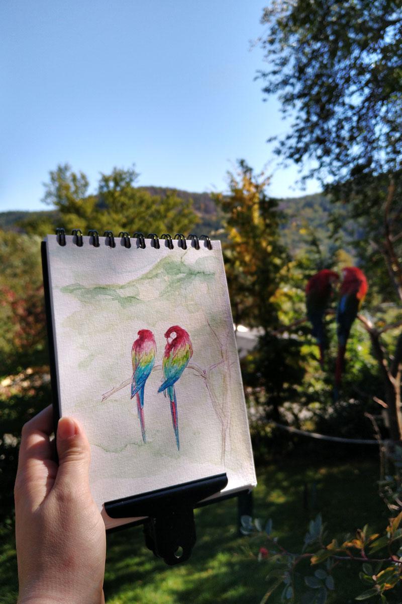 Strahlend blauer Himmel, das erste farbige Herbstlaub und die kräftig rot gefiederten Papageien.