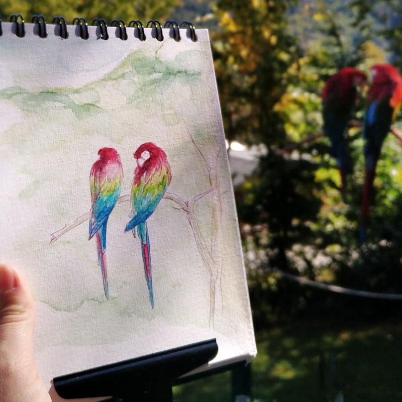Tiere live zeichnen