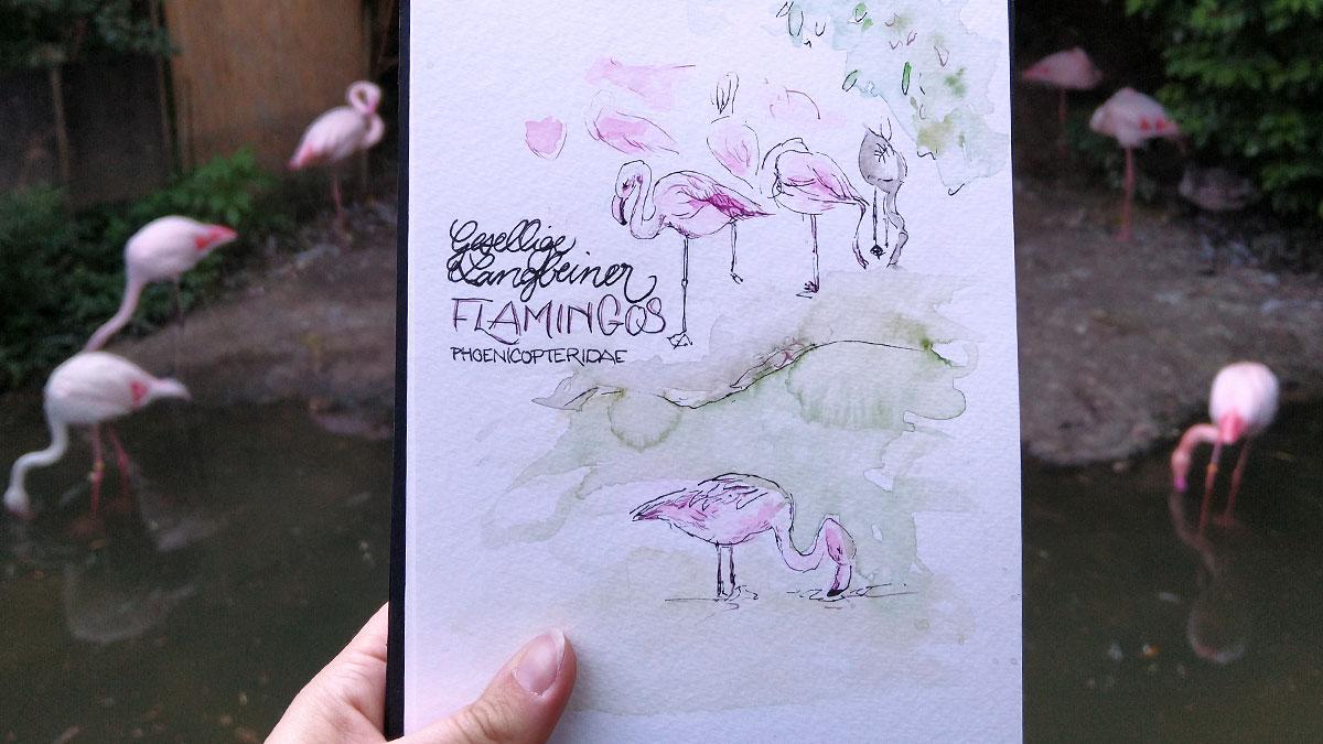Nur drei Flamingos habe ich schnell mit dem Füller grob gezeichnet. Weitere Vögel nur mit hellrosa Flecken angedeutet.