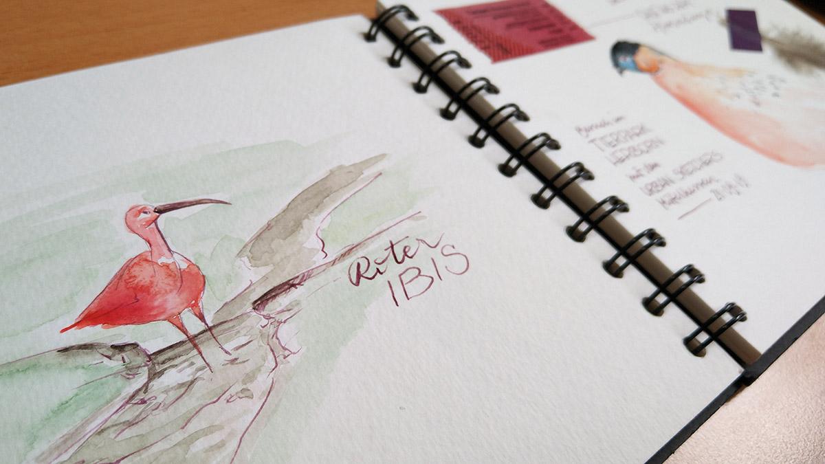 Der Rote Ibis in meinem Aquarell-Skizzenbuch.