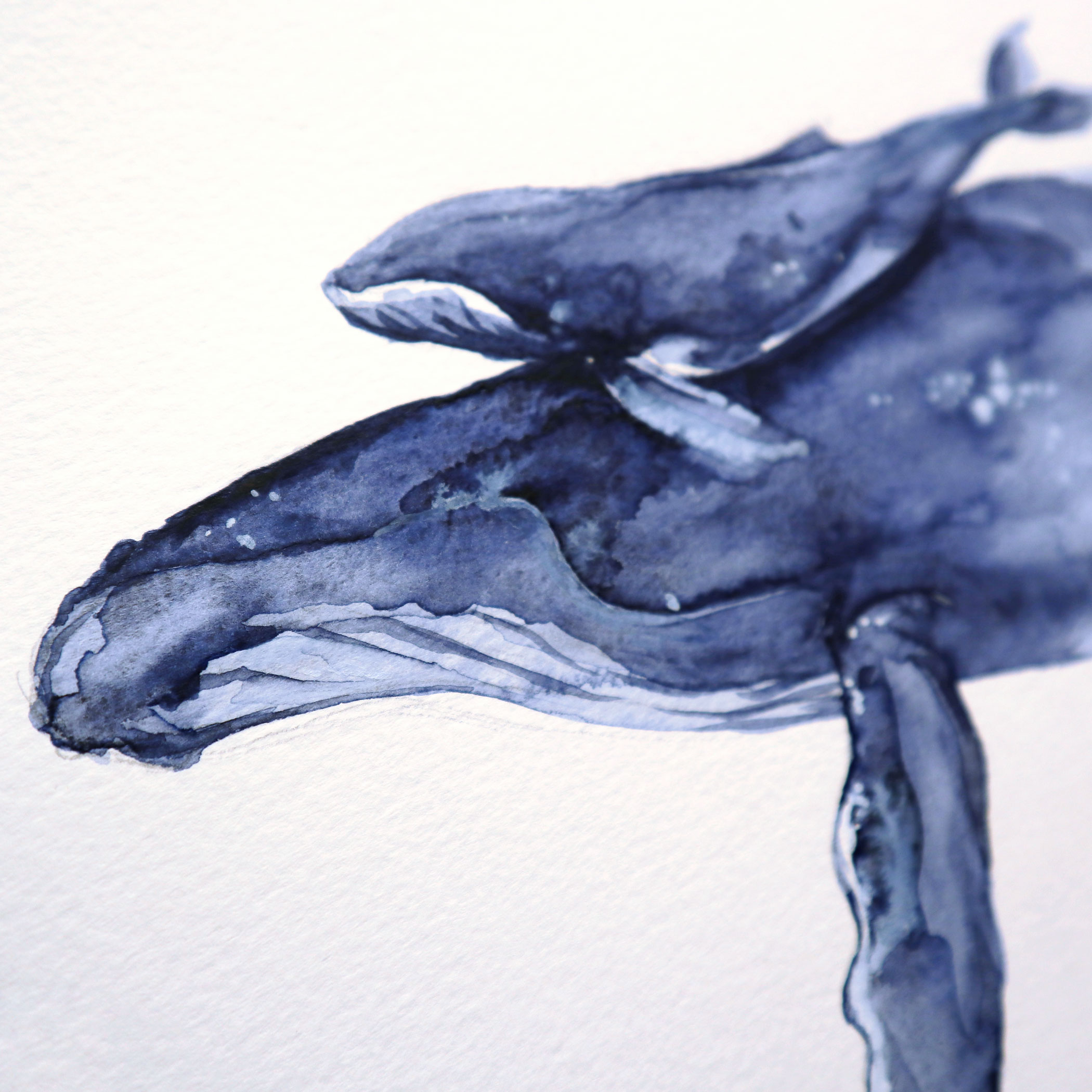 "Limitierter Print ""Ich trage Dich"" Buckelwale in Aquarell, Detail"