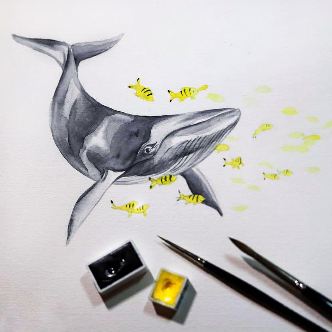 Ein grauer Zwergwal mit vielen gelben Fischen: Auch in der Natur kommen die Pantone-Farben des Jahres zusammen.