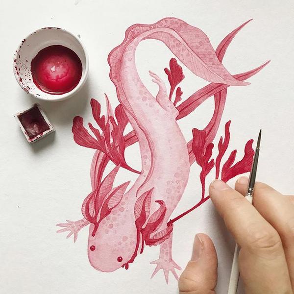 Ein Axolotl in Rot-Rosa wurde von der Community gewünscht.